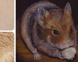 Как рисовать шерсть животных
