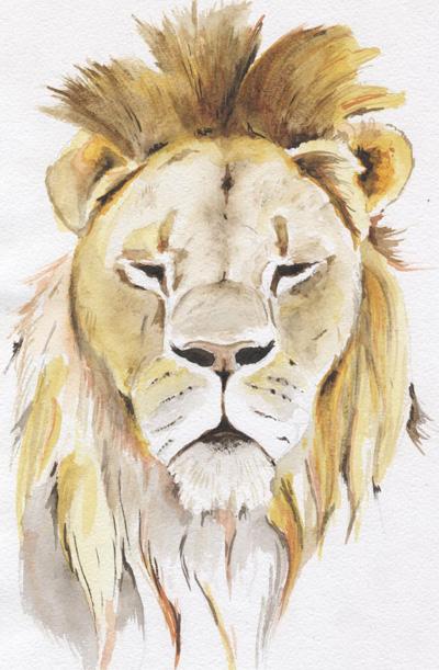 lion_012