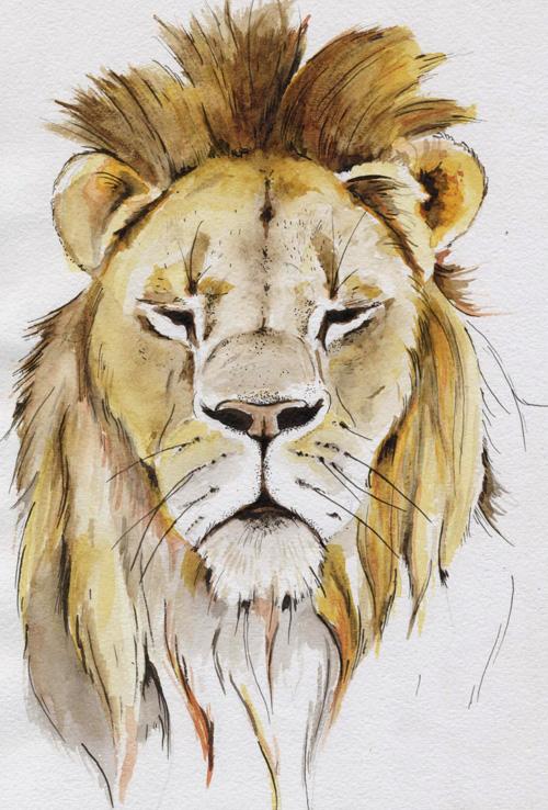 lion_013