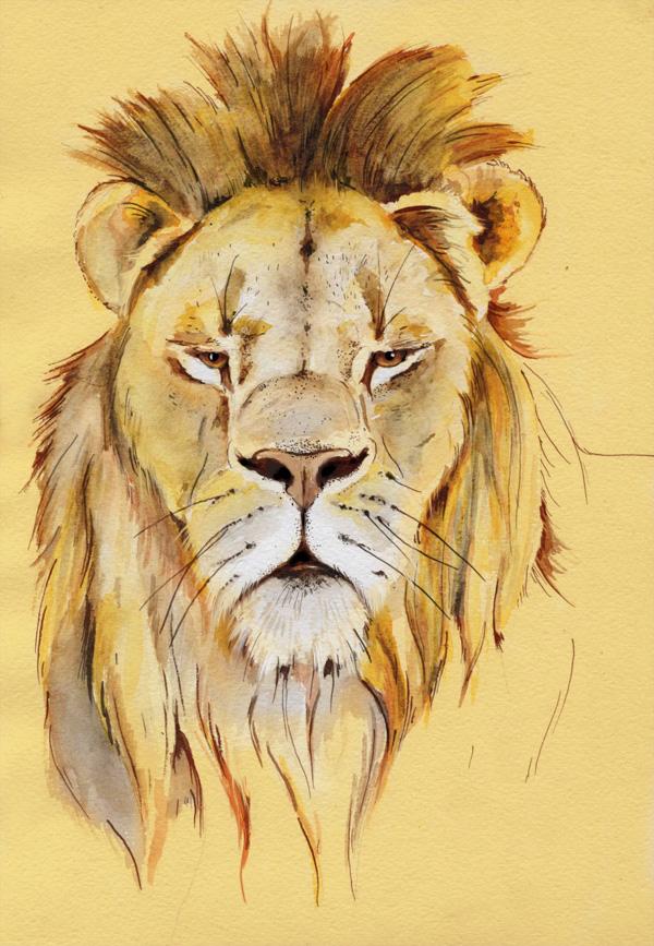 lion_014