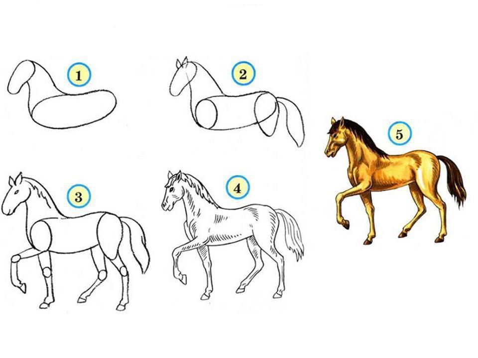 Как карандашом нарисовать голову лошади карандашом поэтапно