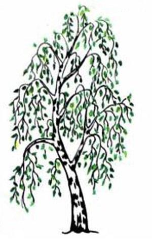 Как научится рисовать дерево поэтапно карандашом