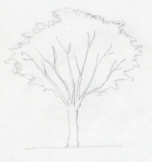 Нарисовать осенние деревья карандашом поэтапно