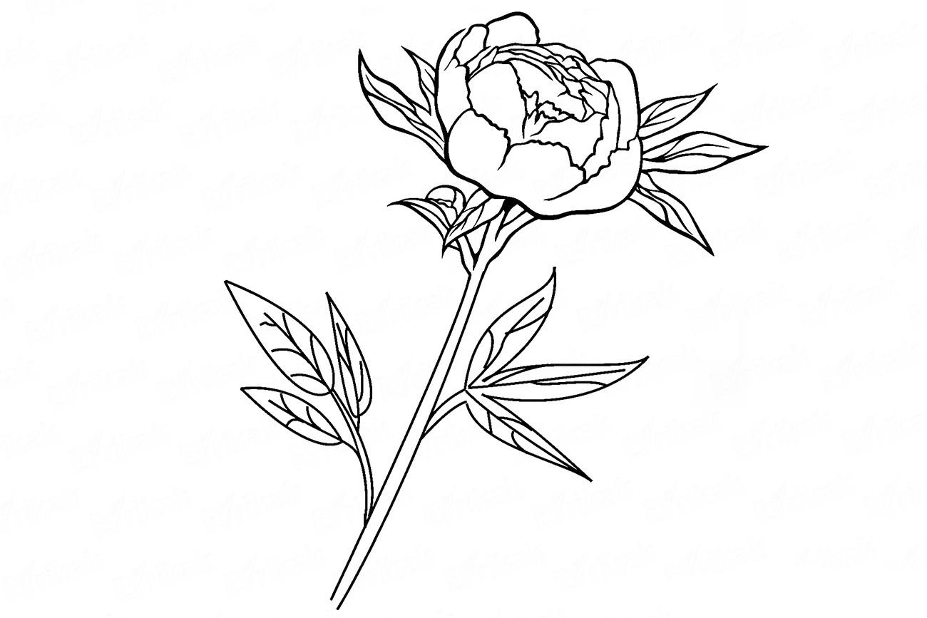Как рисовать два цветка
