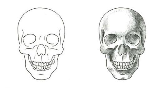 картинки черепа карандашом