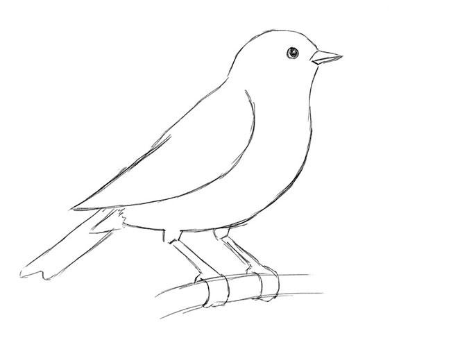 Птичку нарисовать поэтапно