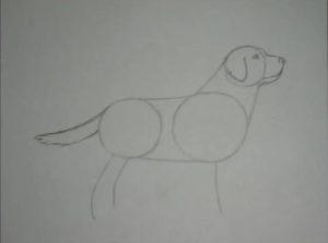 Как нарисовать добермана карандашом поэтапно
